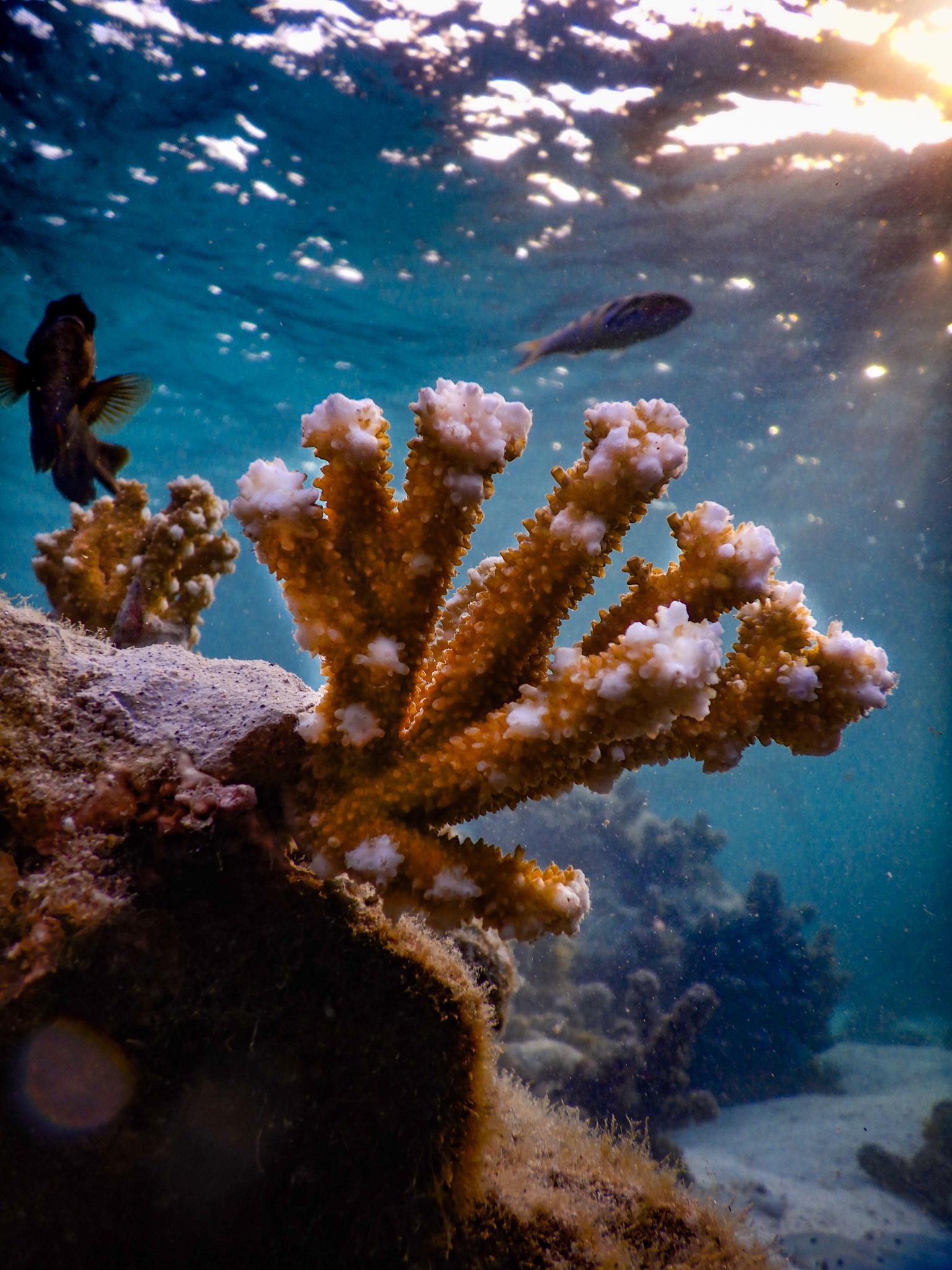 L'importance du corail